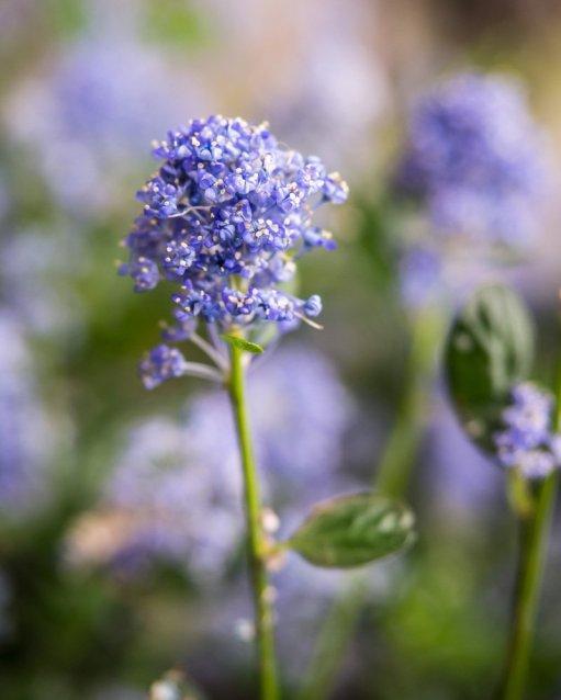 fleur-b