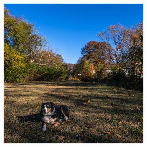 automne-huntsville-2016-11-19-1