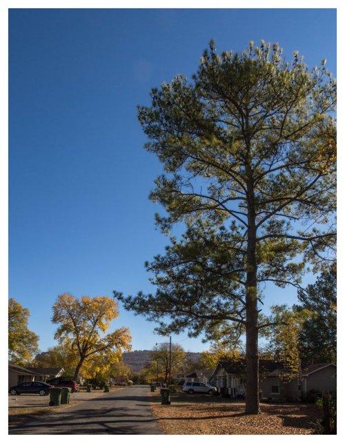automne-huntsville-2016-11-21-1