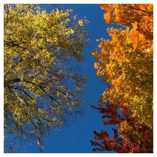 automne-huntsville-2016-11-21-4