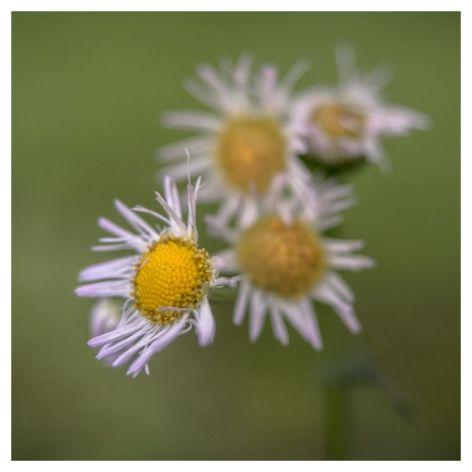 flora 2017-05-04 1