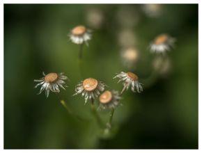 flora 2017-05-04 2