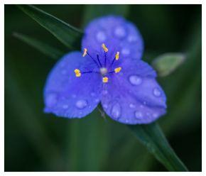 flora 2017-05-05 2