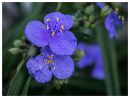 flora 2017-05-05 3
