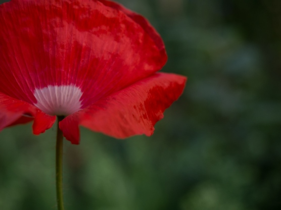 fleurs de vancouver-3