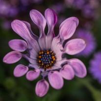 fleurs de vancouver-6